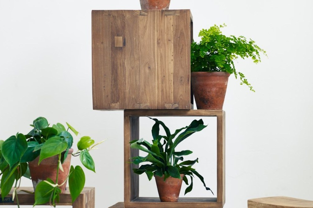 Indoor plants for space and fresh air