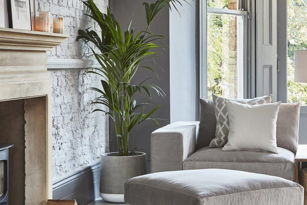 Self care with indoor plant in industrial concrete planter